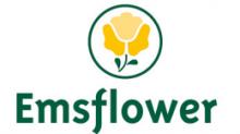 Emsflower GmbH